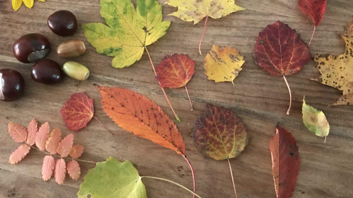 Die schönsten Herbst-Aktivitäten mit Kindern